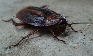 cockroach treatment manchester