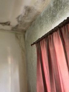 Oldham mould removal service, how to prevent black spot mould, what is causing black spot mould