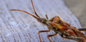 Bed bug treatment service in manchester